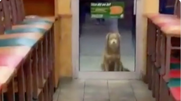 BC - Stray Dog Nicknamed 'Subway Sally' Visits Subway Every Night For Food