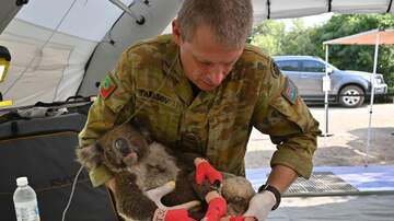 Local News - San Antonio Zoo To Send Help To Australia