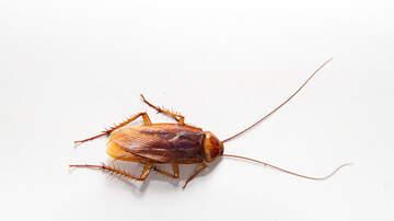 image for Zoológico convertirá en una cucaracha a tu ex para San Valentín