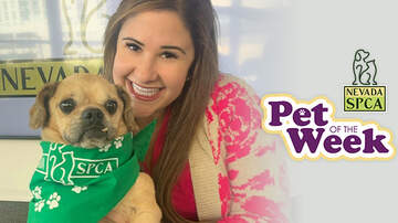 AJ and Joanna Morning Show - ADOPTED! Sunny 106.5's Pet Of The Week: Luigi