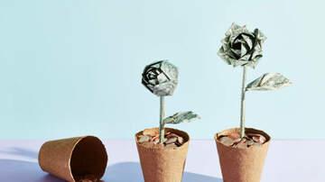 Ellen K - Trader Joe's & Costco Are Selling Money Trees That Attract Wealth