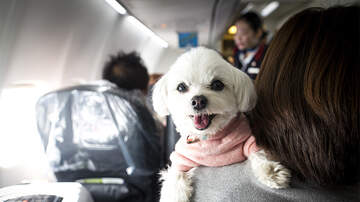 National News - U.S. Proposes New Rules That Would Ban Most Service Animals On Planes