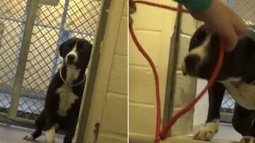 Suzette - Watch The Adorable Moment This Dog Realizes He's Being Adopted