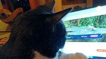 The Kane Show - NEW TREND: Cats Watching YouTube