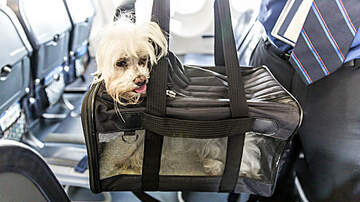 Kari Steele - DoT Really Wants To Ban Support Animals Other Than Dogs From Flights