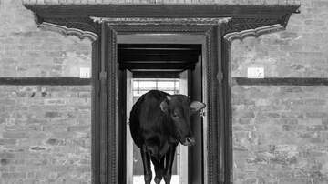 Fisher - Knock Knock, Who's There? Cow. Cow Who?