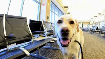 Tracy Lynn - Emotional Support Animals Might Banned From Planes