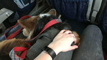Mick Lee - Feds Consider New Rule to Ban Most Emotional Support Animals on Planes