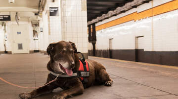 None - The US gov't is cracking down on fake service animals