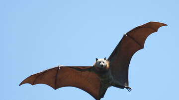 Lori - People Eating Bats In China Are Freaking Out The Internet