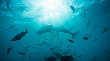Kari Steele - Scientists Just Discovered 4 New Species Of Sharks That Walk!