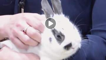 Renee - Meet Thumper the Bunny! Looking for a Hoppy Home.....