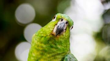image for Parrot Sings 'Baby Shark' Perched Upon His Cage