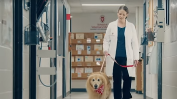 image for Man Buys $6M Super Bowl Ad to Thank Vet for Saving His Dog From Cancer