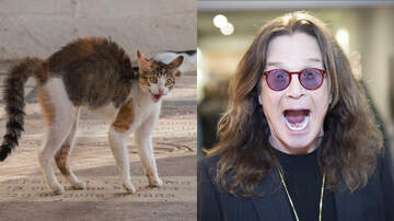 iHeartRadio Music News - Ozzy Osbourne Gets 'Declawed' In Gruesome New PETA Campaign