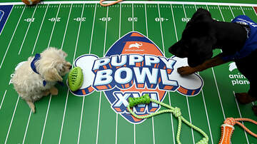 image for Pittsburgh Pup to Play in This Year's Puppy Bowl