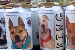 Woman Recognizes Dog Missing For Three Years On Florida Brewery Beer Can