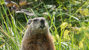 image for Groundhog Day: No Shadow Means Early Spring