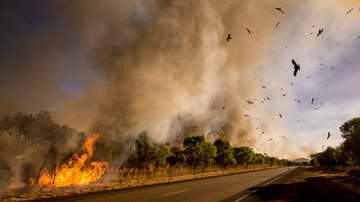 image for  Dashcam Captures Speed Of Bushfire