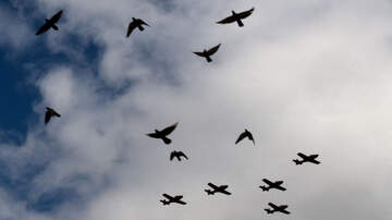 image for Birds Descend on Texas Shopping Center...like a Hitchcock movie!