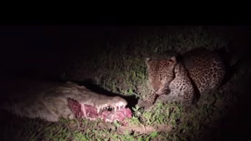 image for Leopard Snatches Meat From Mouth Of Croc
