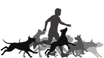 image for Guy Fights Off a Pack of Neighborhood Dogs