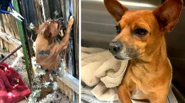 image for Dogs Recovers After Being Covered in Cactus Needles