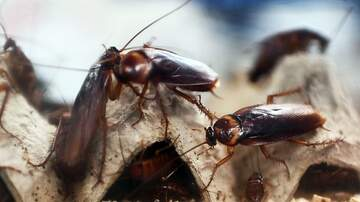 image for You Can Name A Cockroach or a Rat After Your Ex for V-Day at Texas Zoo