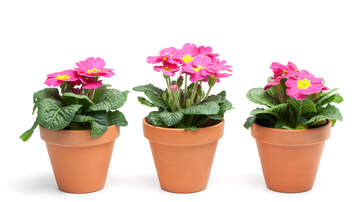 image for Study: Staring At A Plant Reduces Work Stress