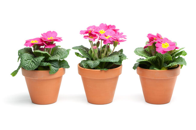 Close-Up Of Potted Plants Against White Background