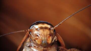 image for Name a Cockroach After Your Ex, Watch an Animal Eat it On Valentine's Day