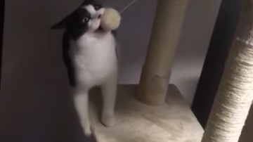 image for ***VIDEO***  Cat Refuses To Release Toy