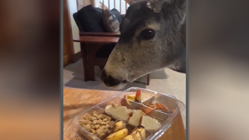 image for Colorado Parks & Wildlife Warns Against Feeding Wild Animals in Your Home
