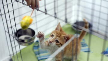 image for Watch: Cat Refusing to Let Go of Toy