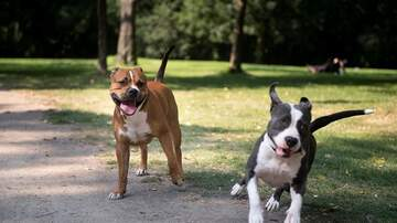image for City Lifts 30-Year Ban on Pit Bulls