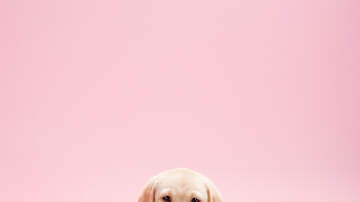 image for Americans Expected to Spend $1.7 Billion on Their Pets for Valentine's Day