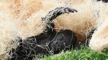 image for SF Zoo Offering Special Valentine's Day Adoptions
