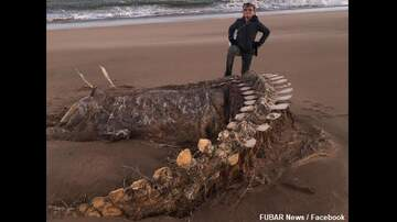 image for 'Sea Monster' Remains Found in Scotland