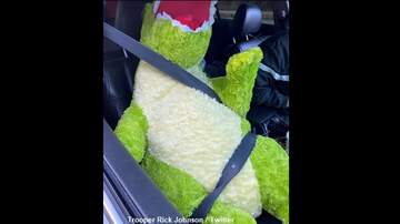 image for Driver Busted Using Carpool Lane with Giant Stuffed Dinosaur Riding Shotgun