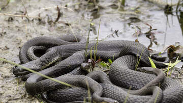 image for Florida Park Had to Close Because of a Massive Snake Orgy