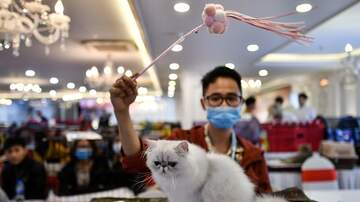 image for Coronavirus Masks Are For Cats Now, Too