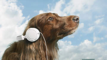 image for Can Music Really Soothe A Nervous Pet? Maybe So!