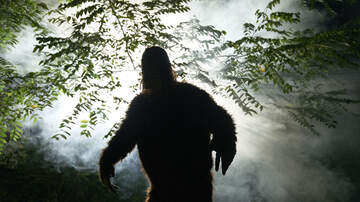 image for VIDEO: Is This Proof That Bigfoot Exists?