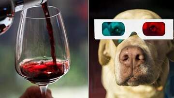 image for Texas Movie Theatre Lets You Bring Your Dog & Bottomless Wine