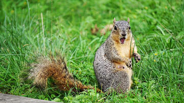 image for WATCH: Squirrel Unexpectedly Jumps at Man From Restroom Dustbin