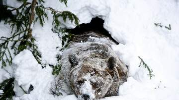 image for This Vid Still Gets Me:  Snowboarder Chased By Bear & She Doesn't Even Know