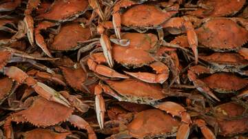 image for Florida Is Looking For People To Watch Crabs Have Sex