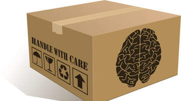 image for Human brain was shipped to Kenosha from Canada