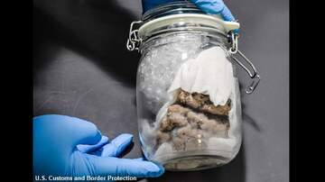 image for Border Patrol Finds Human Brain in Package Shipped from Canada