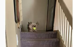 image for Sweet Dog Plays Fetch With Himself